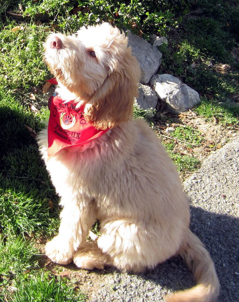 Low Shed Dogs Medium In Size 28 Images Hypoallergenic Dogs Medium Size Www Pixshark Low