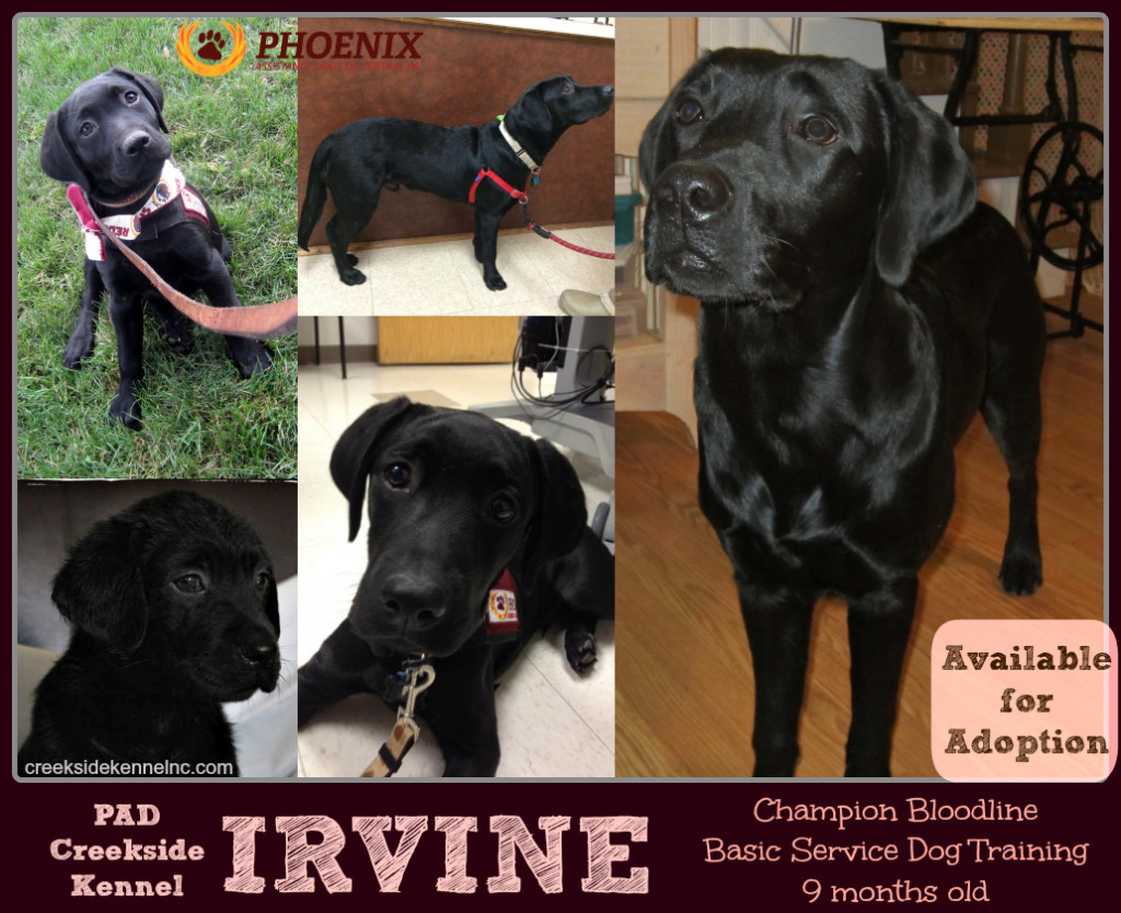 IrvineAdoption